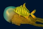 Highlight for Album: Favorite Underwater Pictures