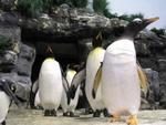 Highlight for Album: Penguins Exhibit